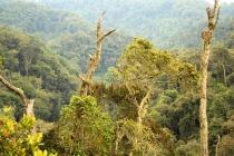 Bwindi Area - Uganda