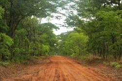Stunning woodland