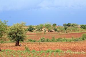 Tea Farms between Malawi and Zambia