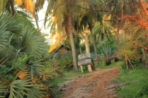 Beautiful Coconut Groves