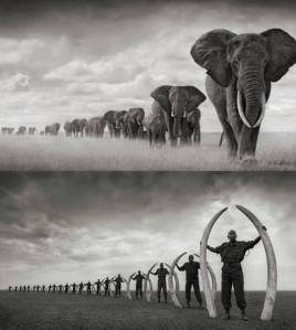 They say a picture is worth a thousand words. (Photo: Nick Brandt)