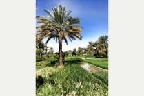 Farmland near the Nile an Oasis of green