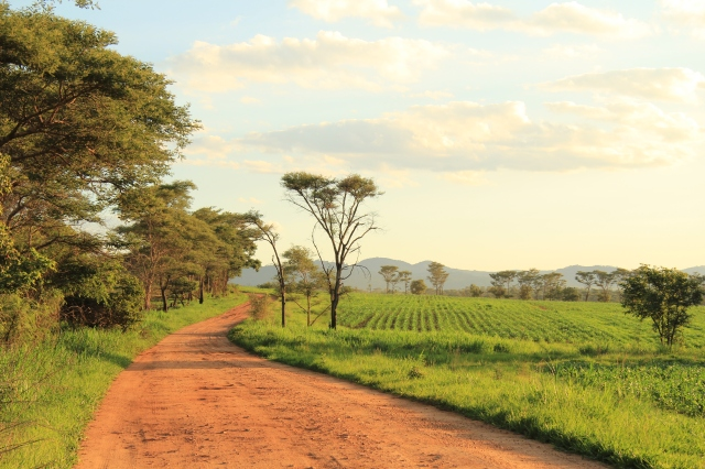 Tea Farms near Arcadia Dam outside Harare